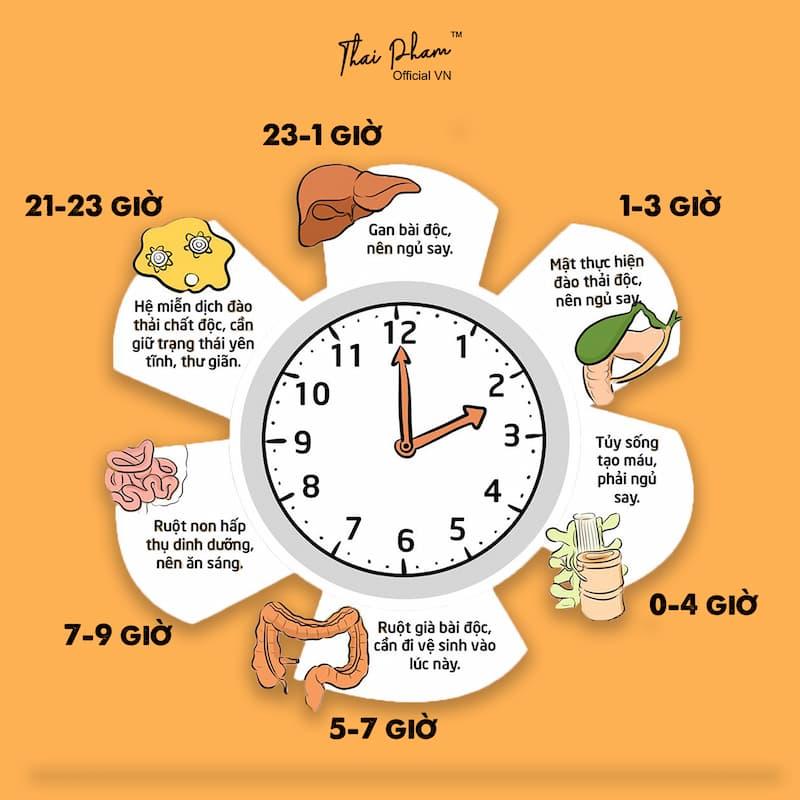 lịch ngủ giúp phục hồi nội tạng